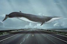 Игра Синие киты (море китов, тихий дом)