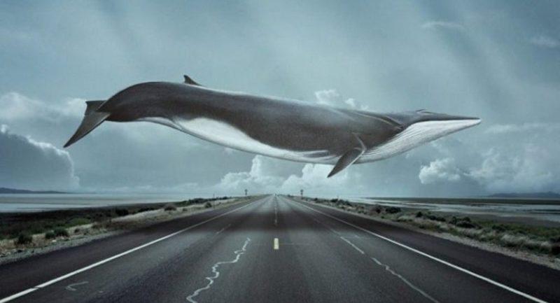 Что такое синие киты, куда они плывут по небу